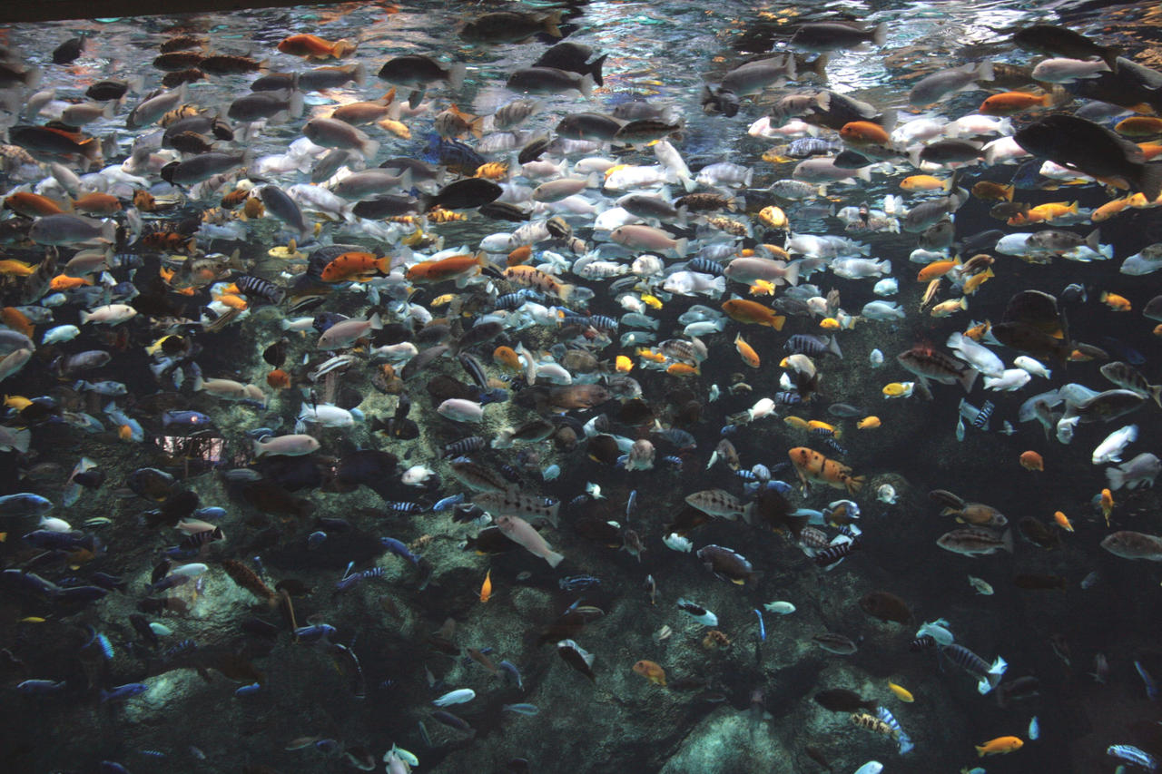There 39 s plenty of fish by a620 on deviantart for Browse plenty of fish
