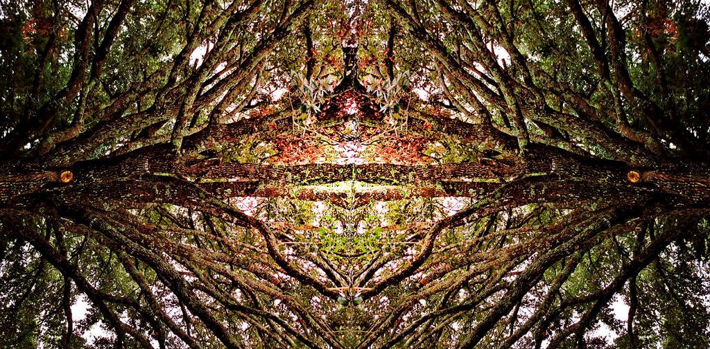 Reflection Tree by RobertRobledo