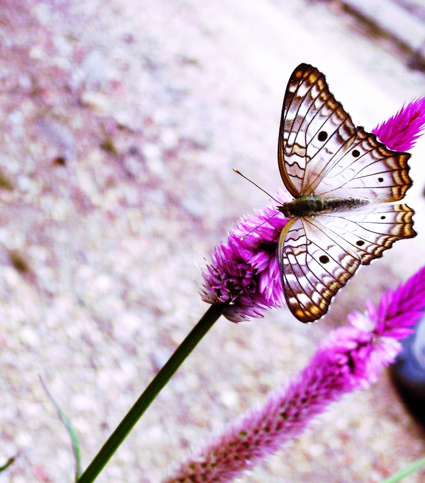 Butterfly by BellaNellaMorte