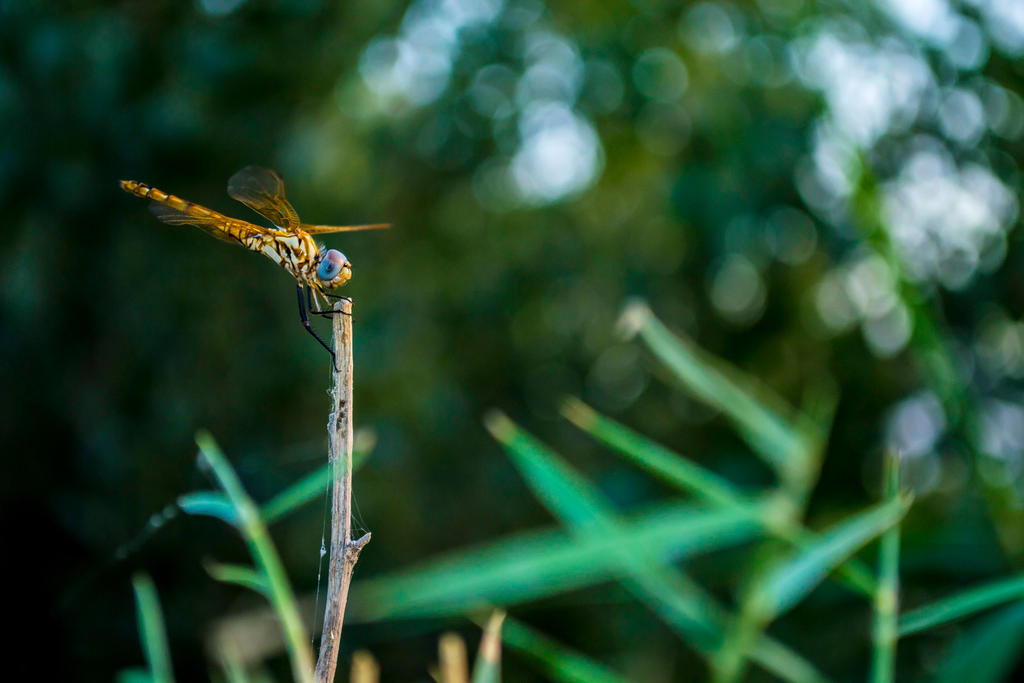 Restin wasp by musi1
