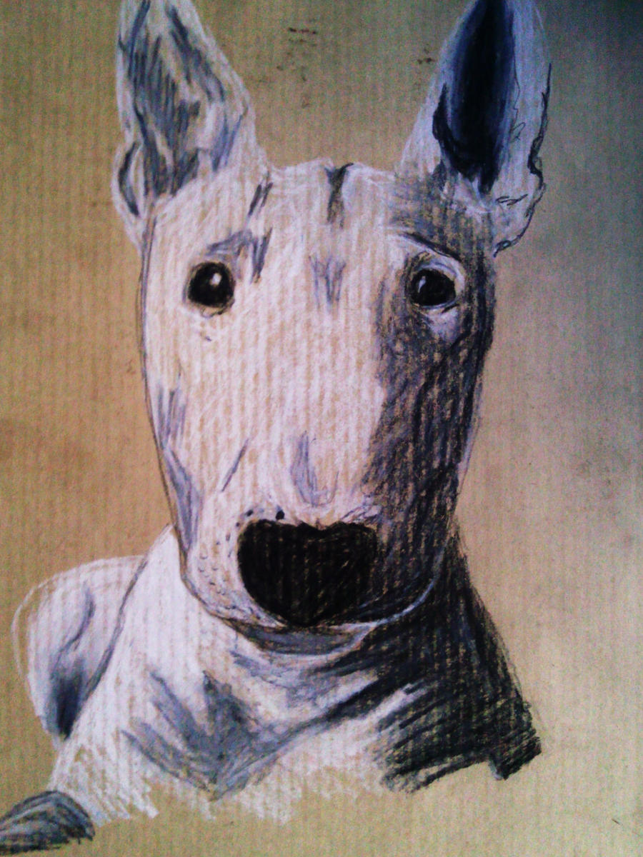 bull terrier by Arteha