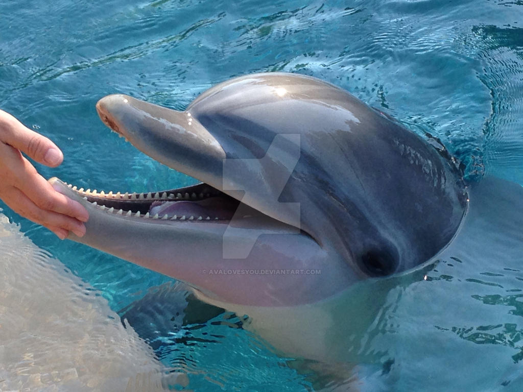 Sorry: Dolphins Aren't Smiling | Reader's Digest