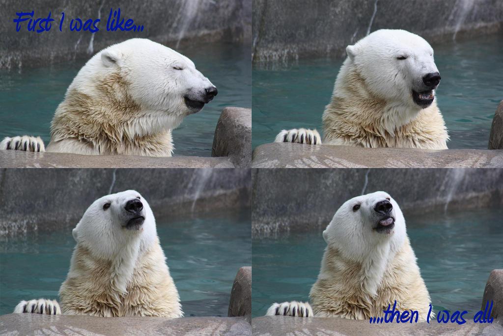 Lol Bear Polar Bear LOL by Ninj...
