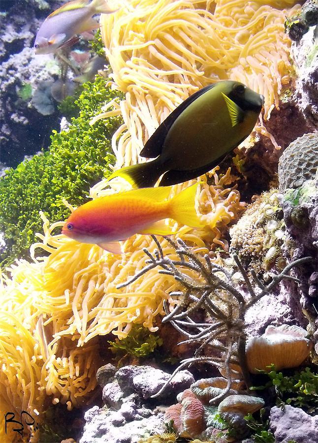 Coral Reef by FiatLupi
