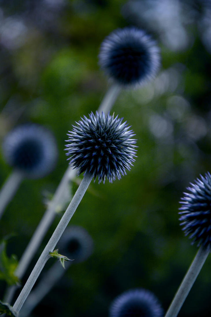 Vicious Bloom by Schokopir