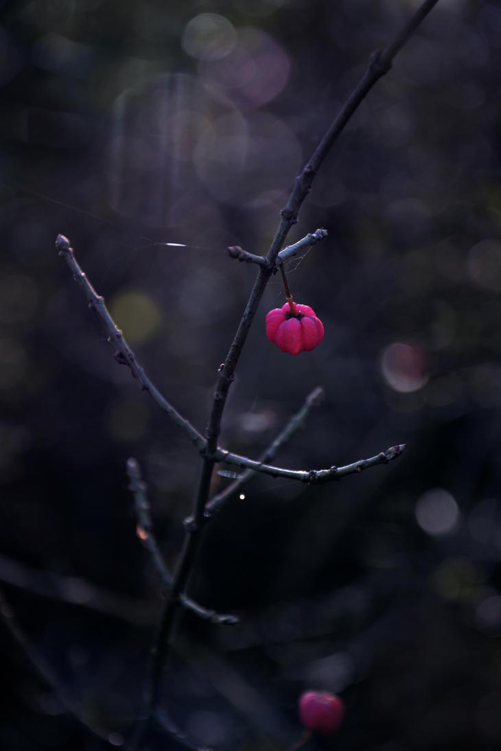 Jack-o'-lantern by Schokopir