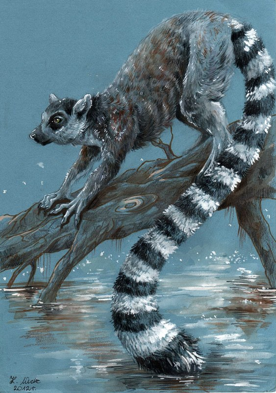 Lemur by Wucke