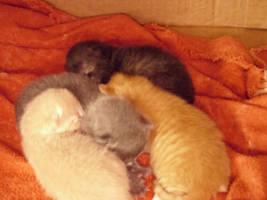 Kittens by hanajimawashere