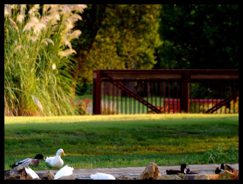 Ducks by damndansdawg