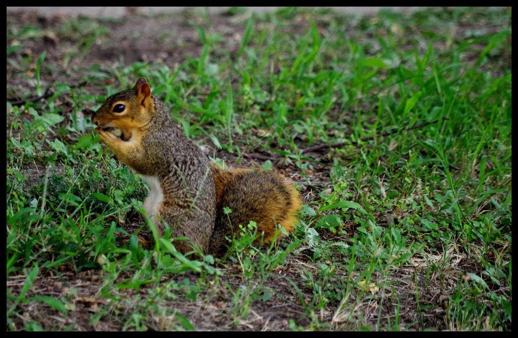 Squirrel1 by damndansdawg