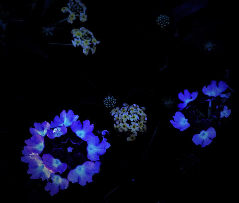 Glowing In The Dark by damndansdawg