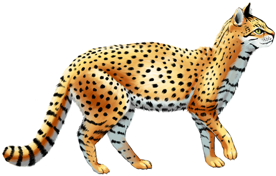 Geoffroy's Cat