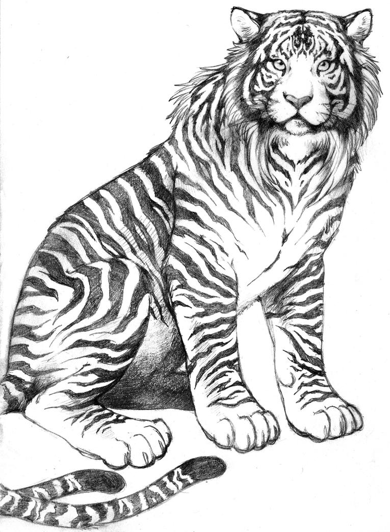 Image Result For Realistic Tiger Coloring
