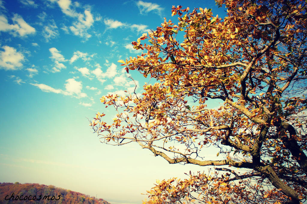Golden Autumn 2 by Chococosmos