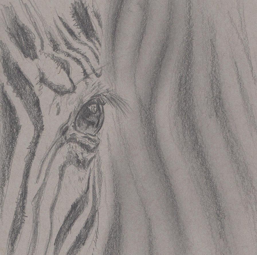 Zebra by cornonthe-cob