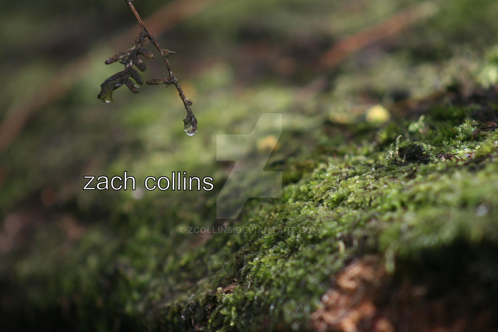 Droplet by Zcollins