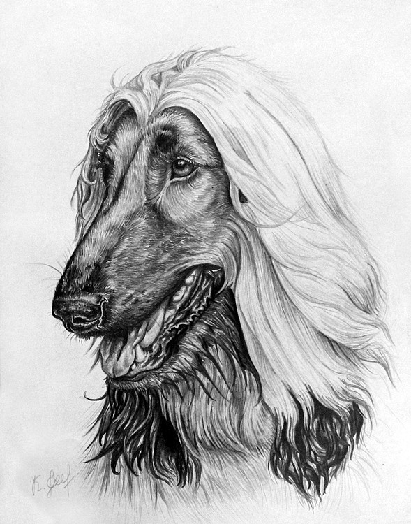 Afghan hound by KarinaLoveDubai on DeviantArt