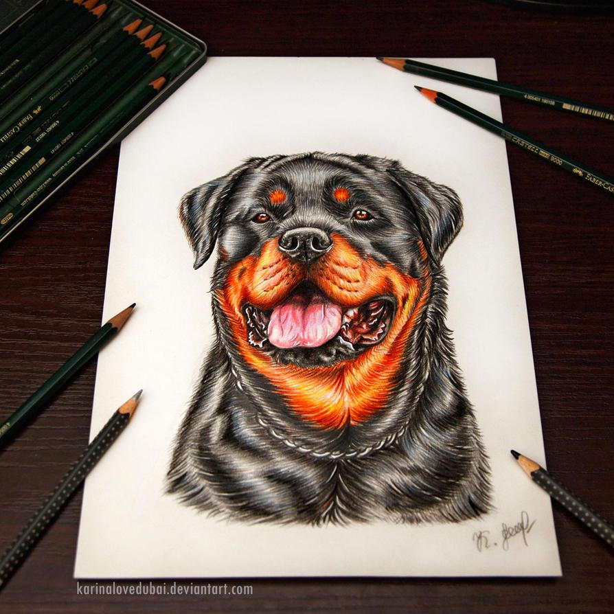 Rottweiler Wallpaper: Rottweiler By KarinaLoveDubai On DeviantArt