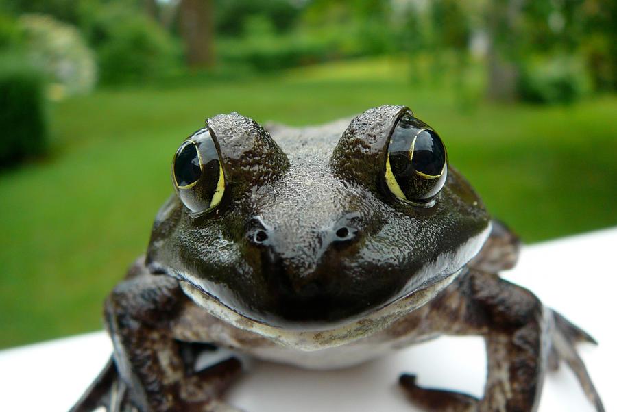 Hob Up Close by hobfrog07