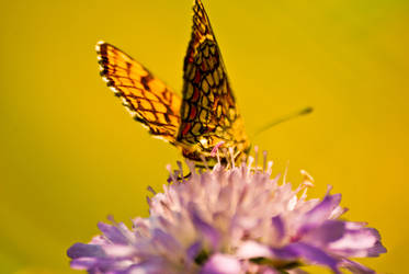 Butterfly by Lauri6