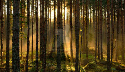 Morning lights by Lauri6