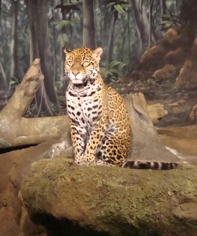 The Handsome Jag by AliasBurn