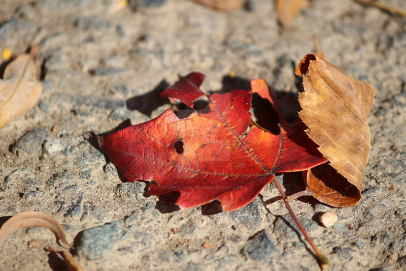 Discarded Autumn by greyloch-md