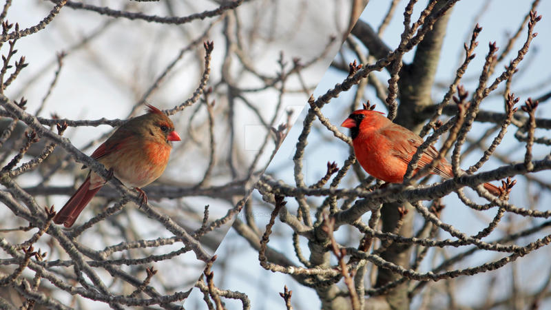 Diagonal Cardinals by greyloch-md