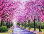 Path of Cherry Blossoms