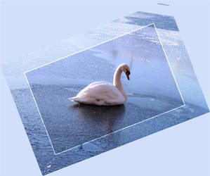 Swan in icy lake by CeeJa