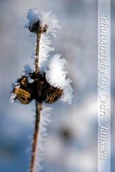 King Winter by CeeJa