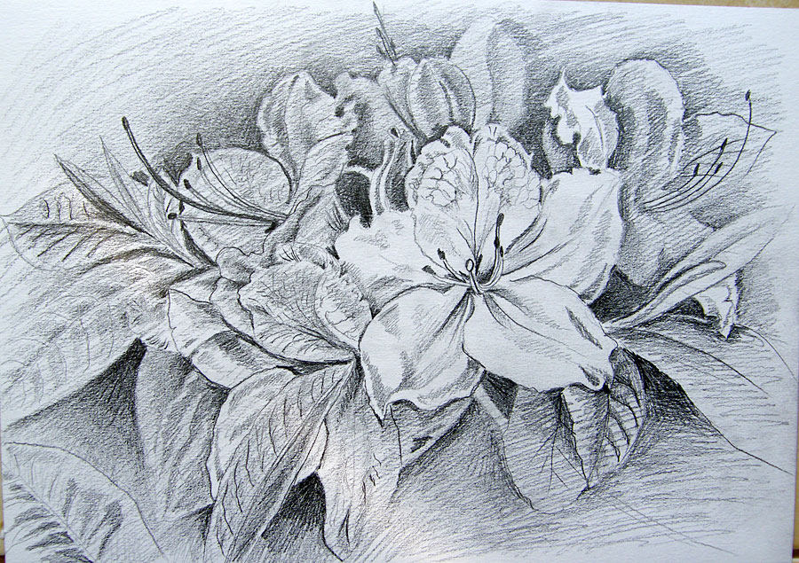 Traditional Flower Line Drawing : Flowers pencil drawing by gosia jasklowska on deviantart