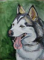 Aszar - dog watercolor by gosia-jasklowska