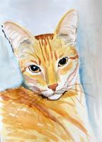 My cat Filutek - watercolor by gosia-jasklowska