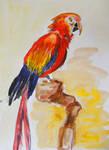 Papuga - bird watercolor