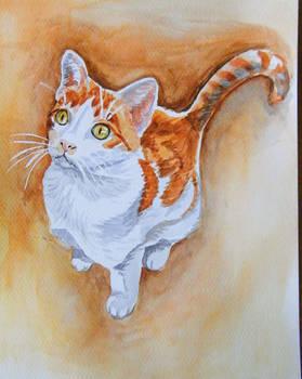 Sloneczko the cat - watercolor