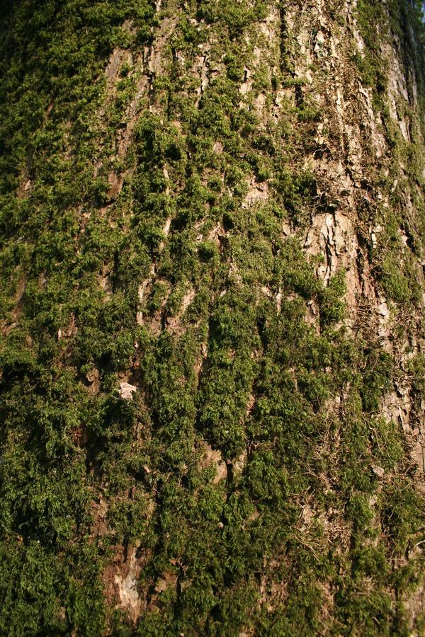 Treek Bark XII by witchfinder-stock