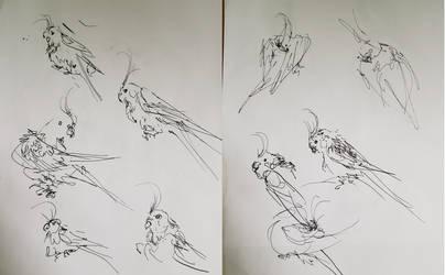 doodles of parrots part1 by QuirkyLabourer