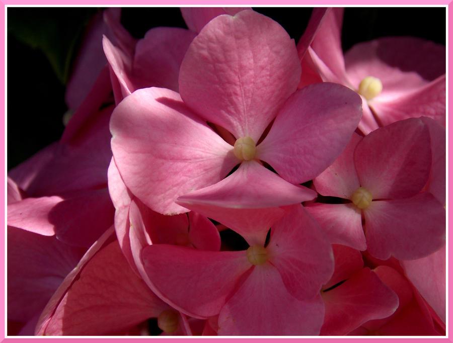 Softness by TheRafflesia