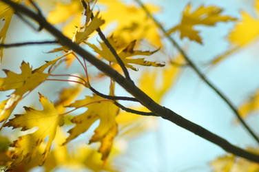 Day 23 of 365 - The yellow leaves are falling by AmyKPhotos