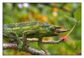 Chameleon by andrewmcconville