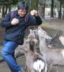 Nara deer Attack