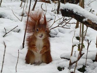 Squirrel 9 by Cundrie-la-Surziere