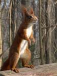Squirrel 26