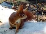 Squirrel 34