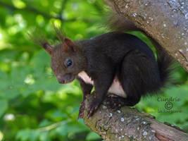 Squirrel 99 by Cundrie-la-Surziere