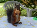 Squirrel 114