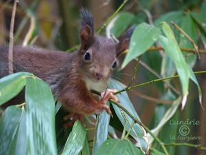 Squirrel 182