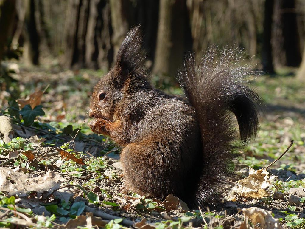 Squirrel 195 by Cundrie-la-Surziere