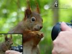 Squirrel 219 - Squirrelshooting